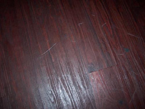 Brilliant Dog Scratch Laminate Floor 500 X 375